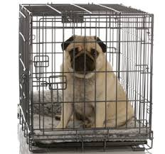 dog sitting in crate