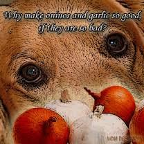 Dogs eating garlic