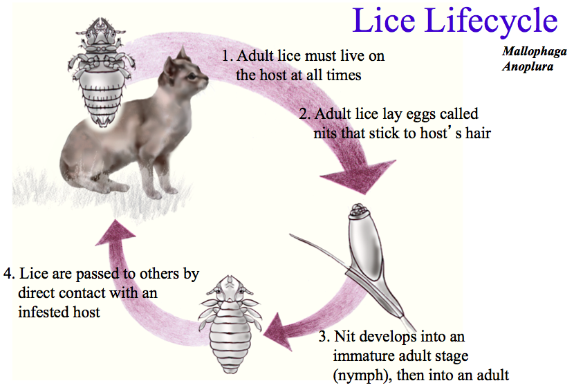 Cat Mange Natural Treatment  Earth Clinic  Natural