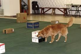 Box search