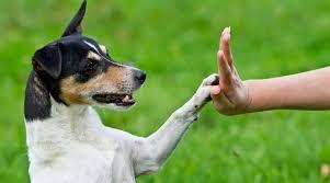 How To Teach A Dog Shake Paw